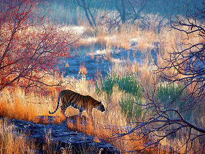 Photograph - Tiger Country by Eromaze