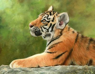 Tiger Cub Painting - Tiger Cub by David Stribbling
