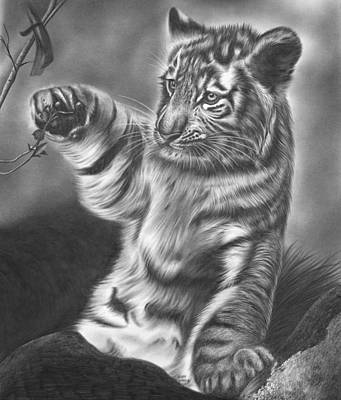 Animals Drawings - Tiger Cub by Jerry Winick