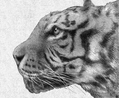 Tiger Wall Art - Drawing - Tiger by Eric Fan