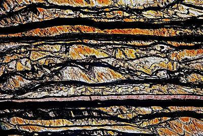 Thin Section Photograph - Tiger Eye by Dirk Wiersma/science Photo Library