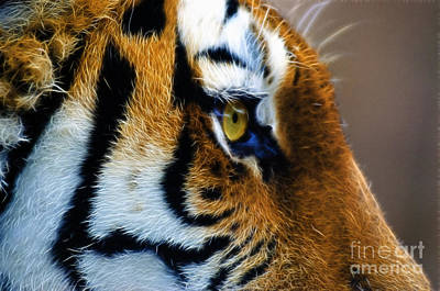 Tiger Fractal Photograph - Tiger Eye by Paul Danaher