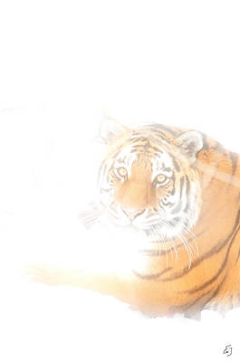 Photograph - Tiger Fog by Emily Stauring