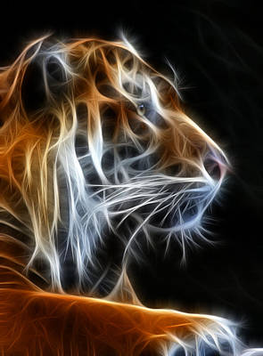 Dark Photograph - Tiger Fractal 2 by Shane Bechler