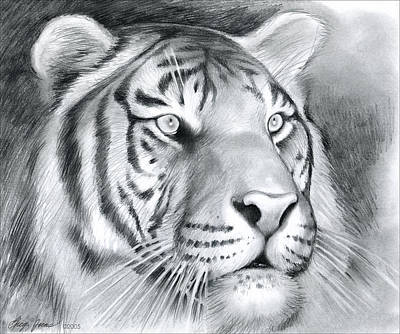 Tiger Wall Art - Drawing - Tiger by Greg Joens
