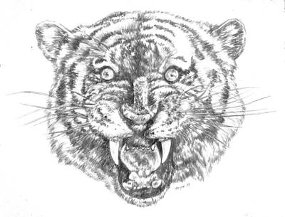 Drawing - Tiger Head by Bryan Bustard