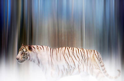 Digital Art - Tiger In The Mist by Valerie Anne Kelly