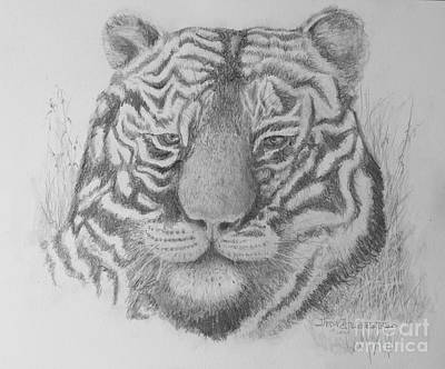 Drawing - Tiger by Jim Hubbard