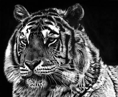 Tiger Art Print by Joey Bergeron