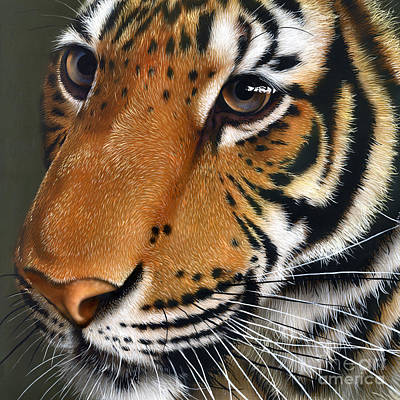 Wild Cat Painting - Tiger by Jurek Zamoyski