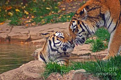 Tiger Kiss Art Print by David Rucker