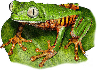 Photograph - Tiger-legged Monkey Frog by Roger Hall