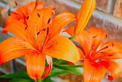 Photograph - Tiger Lilies by Barbara Dean