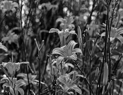 Photograph - Tiger Lilies by Chris Flees