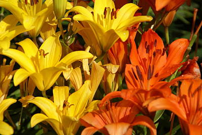 Photograph - Tiger Lilies by Robert Lozen