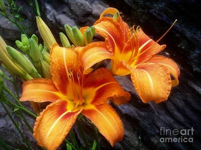Kim Fearheiley Photography - Tiger Lillies by Barbara Chase
