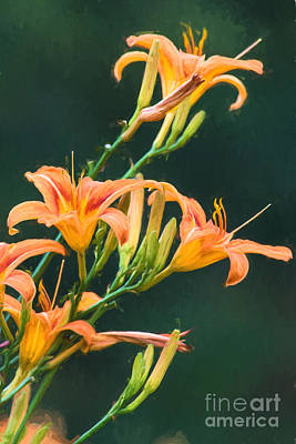 Finger Lakes Digital Art - Tiger Lillies by Michele Steffey