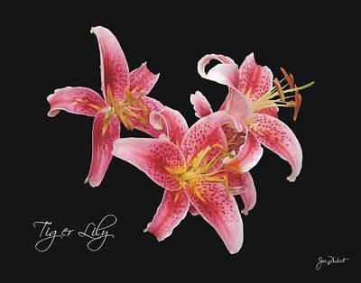 Photograph - Tiger Lily by Joe Duket