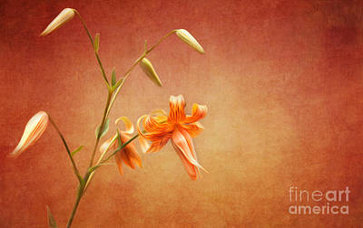 Photograph - Tiger Lily by Lena Auxier