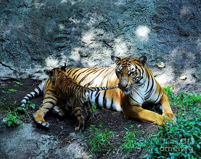 Photograph - Tiger Love 1 by Mel Steinhauer