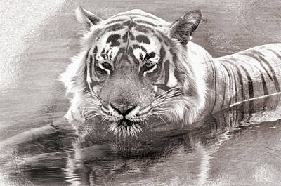 Photograph - Tiger Love Water by Manjot Singh Sachdeva