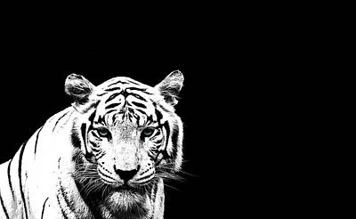 Black And White Photograph - Tiger On Black by Mark Rogan