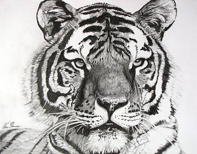Drawing - Tiger On Piece Of Paper by Kevin F Heuman