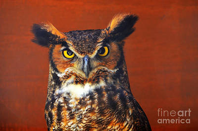 Photograph - Tiger Owl by Rodney Campbell