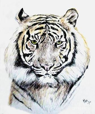 Drawing - Tiger Portrait by Jim Fitzpatrick