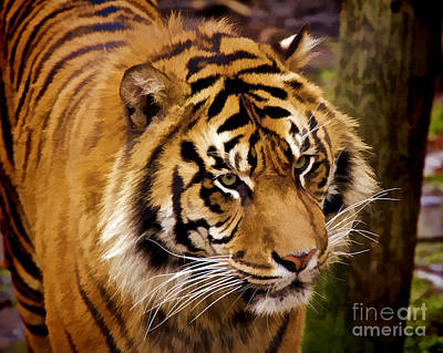 Digital Art - Tiger Portrait by Mike Mulick