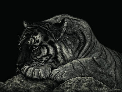 Drawing - Tiger Power At Peace by Sandra LaFaut