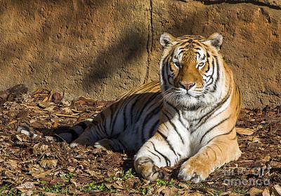 Tiger Art Print by Steven Ralser