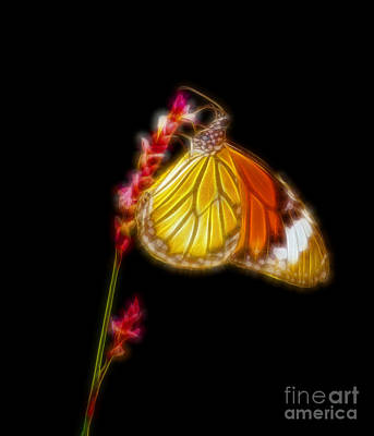 Tiger Striped Butterfly Fractal Art Art Print by Image World