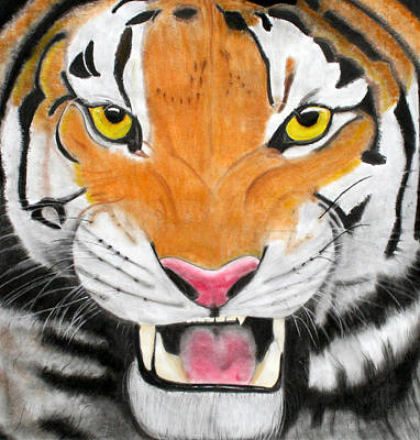 Animals Drawings - Tiger by Susan Burnette