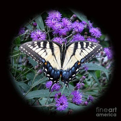 Photograph - Tiger Swallowtail And Ironweed by Patricia Januszkiewicz