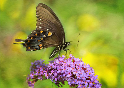 Photograph - Tiger Swallowtail  by Ann Bridges
