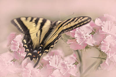 Photograph - Tiger Swallowtail Butterfly In The Garden by Jennie Marie Schell