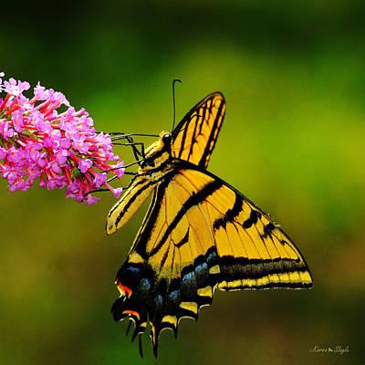 Tiger Swallowtail Butterfly Art Print by Karen Slagle