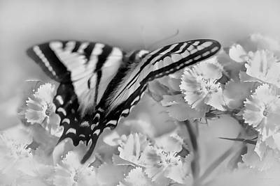 Photograph - Tiger Swallowtail Butterfly Monochrome by Jennie Marie Schell