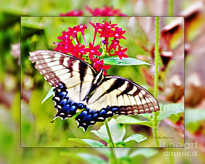 Photograph - Tiger Swallowtail Butterfly by Walter Herrit