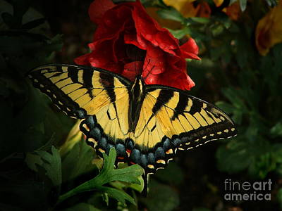 Photograph - Tiger Swallowtail Butterfly by Marilyn Smith