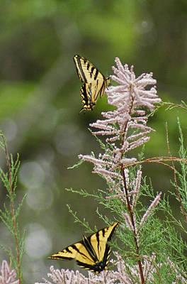 Bug Digital Art - Tiger Swallowtails by Ernie Echols