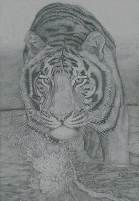 Tiger Through Water Art Print by Rich Colvin
