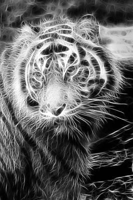 Tiger Tiger Art Print by Mark Kember