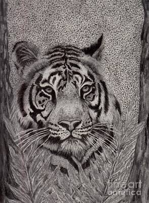 Drawing - Tiger by Tlynn Brentnall