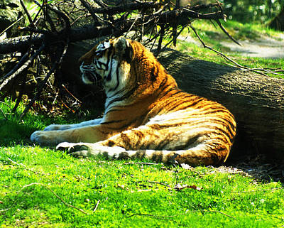 Art Print featuring the photograph Tiger Too by B Wayne Mullins