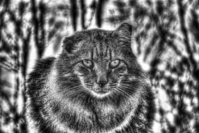 Photograph - Tiger Up Close Bw by Andy Lawless
