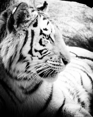 Art Print featuring the photograph Tiger Watch by Erika Weber