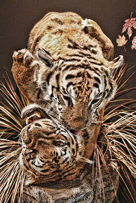 Art Print featuring the photograph Tigers by Angel Jesus De la Fuente