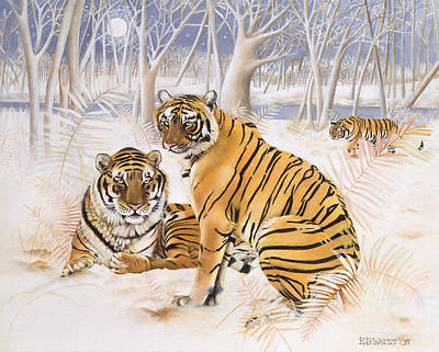 Wildcats Photograph - Tigers In The Snow, 2005 Acrylic On Canvas by E.B. Watts
